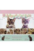 猫のきょうだいカレンダーBengal Cat 2019