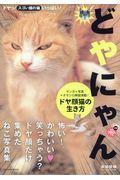 どやにゃん / ドヤ顔猫の生き方