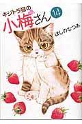 キジトラ猫の小梅さん 14