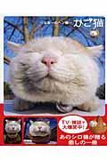 かご猫 / 日本一のヘン顔