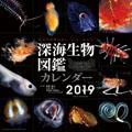 深海生物図鑑 2019年カレンダー
